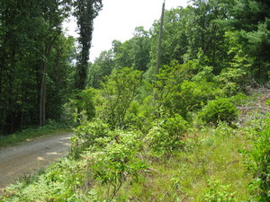 11.96 acres 