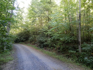 Beautiful wooded tract with creek running through it.   - Foley Road - Stuart, VA