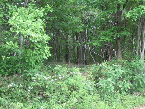 8.24 Acres of Open & Wooded Land - 5 Misty Acres Lane - Meadows of Dan, VA