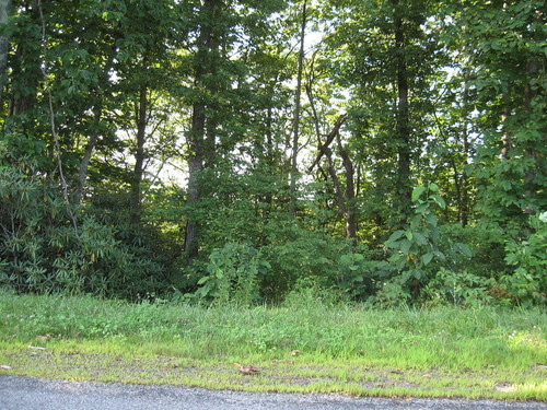 17.02 Acres bordering the Dan River - Cherry Creek Road - Meadows of Dan, VA