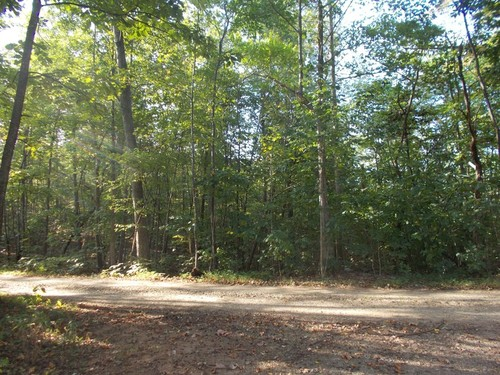 169.52 Acres - TBD Lee Elgin Road - Woolwine, VA