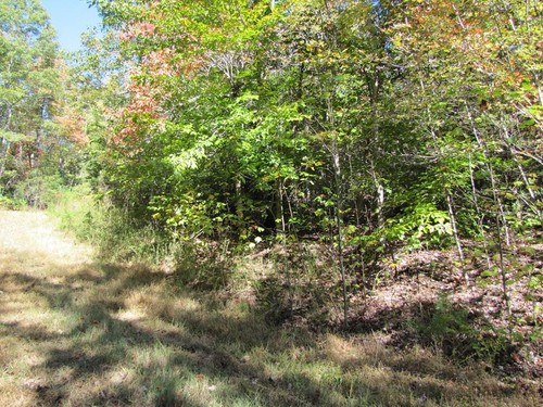 2.0 Acres Wooded Tract of Land - Lot 11 Melmark Acres Trail - Stuart, VA