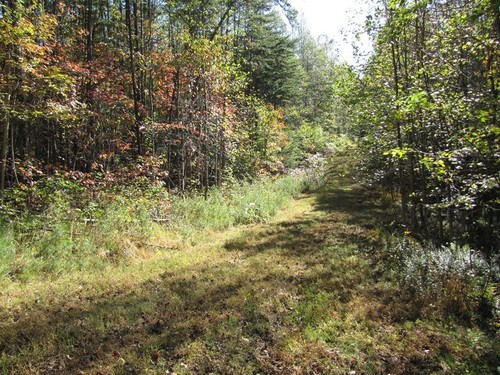 2.0 of Pristine Wooded Land - Lot 12 Melmark Acres Trail - Stuart, VA
