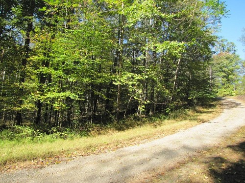 2.0 Acres of Pristine Wooded Land - Lot 42 Melmark Acres Trail - Stuart, VA